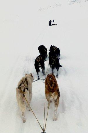 Svalbard Husky: Feel like a real explorer
