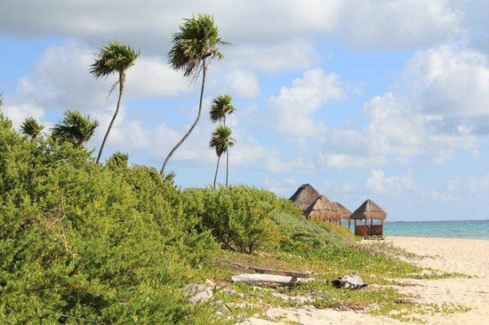 valentin imperial riviera maya des plages bordes de vgtation