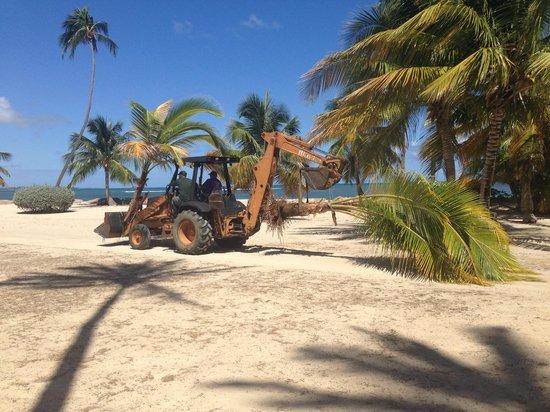 Gran Melia Golf Resort Puerto Rico : palms