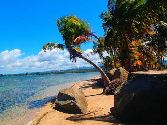 Gran Melia Golf Resort Puerto Rico : palm