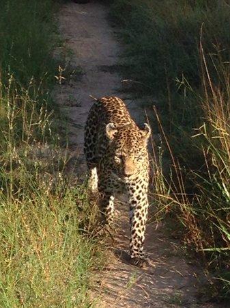 Tydon Bush Camp : Early morning leopard sighting