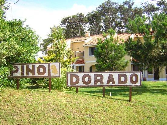 Pino Dorado: Frente