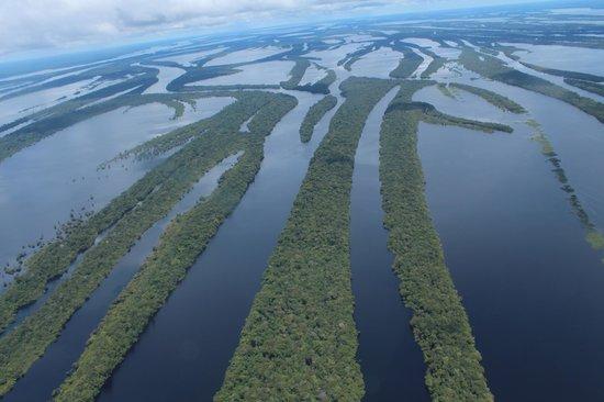 Anavilhanas Jungle Lodge: Vista do arquipelago por hidroavião para chegar ao hotel!