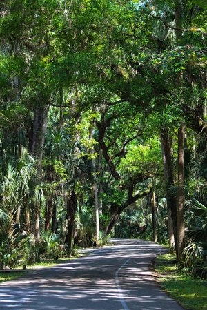 Highlands Hammock State Park: Loved the scenic drives.