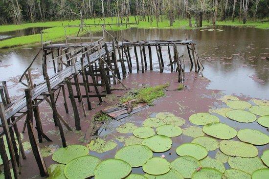 Parque Ecologico Januari: Болотце