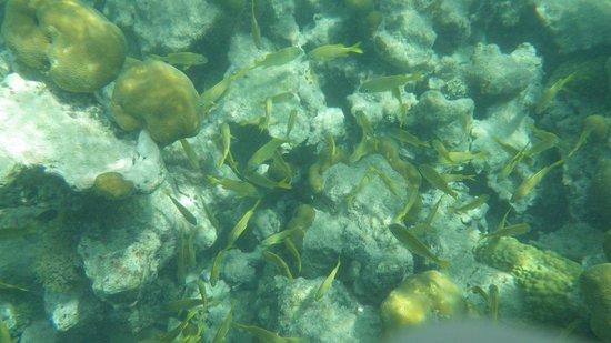 St.Thomas Scuba and Snorkel Adventures: Secret Harbor Snorkel