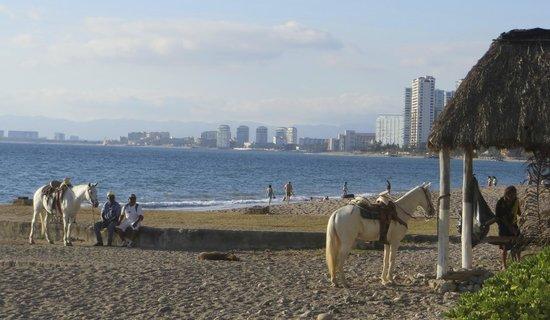Sheraton Buganvilias Resort & Convention Center: Horseback riding on the beach