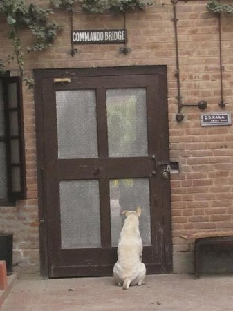 Mrs. Bhandari's Guesthouse : You have to love any place that is nice to dogs