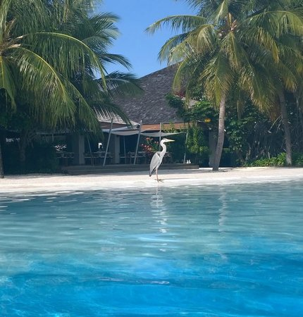 Velassaru Maldives : Wild life creatures belong to Maldives experience