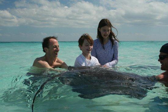Cayman Eco Adventures: Friendly rays