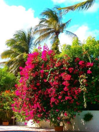 Buccaneer Beach Club: Gorgeous Poolside colour