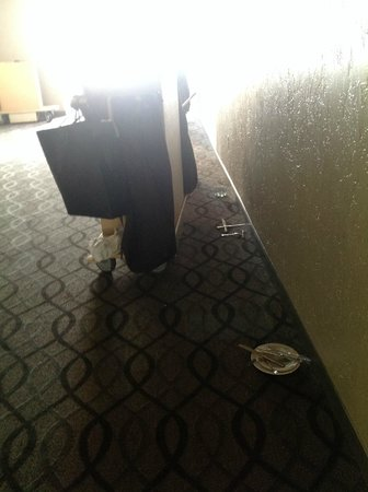 Sheraton Suites Cypress Creek Ft. Lauderdale: unkept hallway - dirty dishes