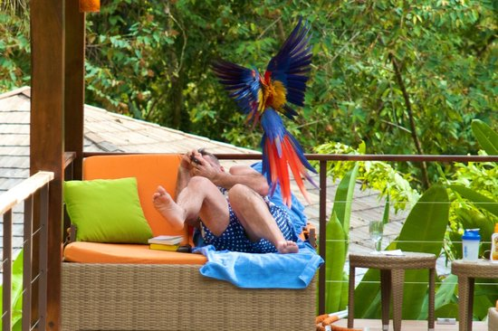 Nayara Resort Spa & Gardens: The temperamental macaw terrifying it's victim (understandably)