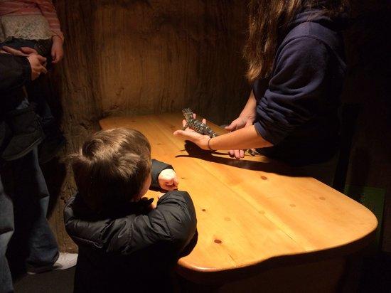 Mystic Aquarium : Checking out a baby gator!