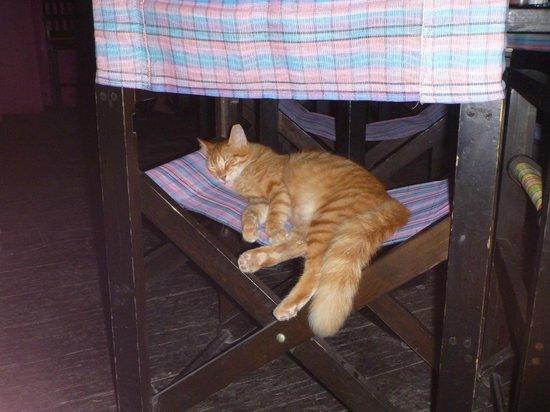 Kondesa Restaurante: The restaurant's cat