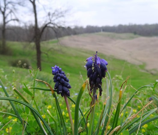 Vicksburg National Military Park : Springtime comes to the Vicksburg Battlefield