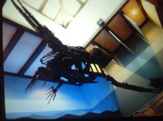 Loggerhead Marinelife Center: fossil turtle