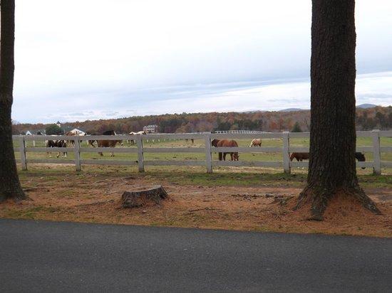 Shenandoah Crossing : Stabled horses