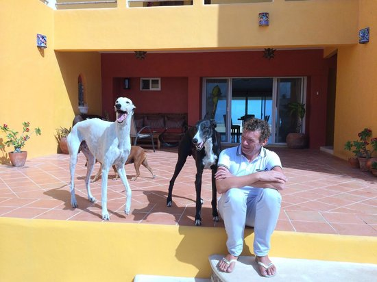Flamingos Inn: Stig and his beautiful dogs