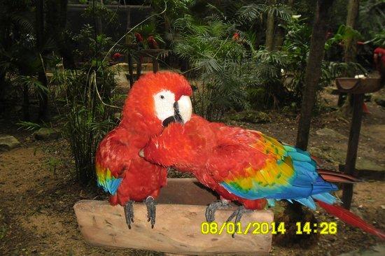 Xcaret Eco Theme Park: Parque das Aves
