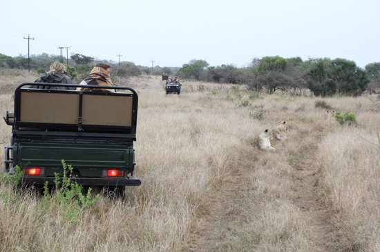 andBeyond Phinda Rock Lodge: Lions resting - look how close we were!