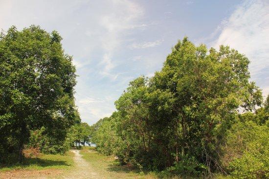 Tropical Resort : Лесок начинается в 15 метрах от домика.