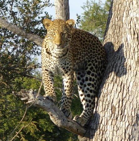 Hoyo-Hoyo Safari Lodge: Spent 30 minutes or more with this guy
