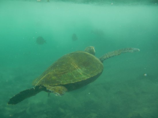 Hilton Waikoloa Village: Swimming with real turtles in the lagoon
