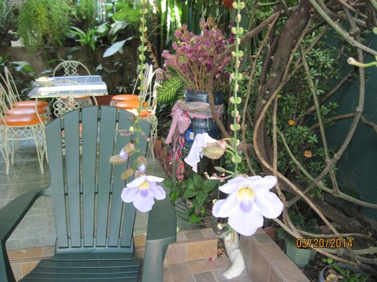 Hotel Oasis: Garden