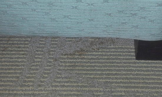 SpringHill Suites Orlando Altamonte Springs/Maitland: Torn Carpet Broken Bed
