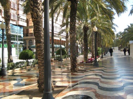 Explanada de España: Пальмы на Эспланаде