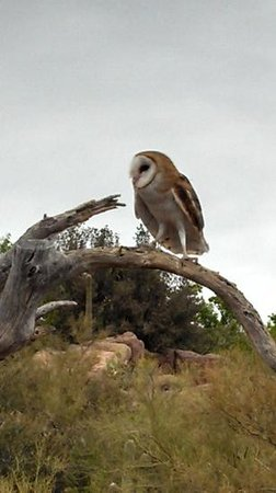Museo del Desierto Arizona-Sonora: from the raptor show, you get really close to the birds!