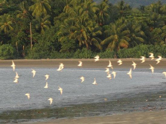 Cabinas Esmo: Playa Punta Uvita