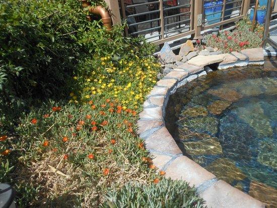Riverbend Hot Springs: Pools