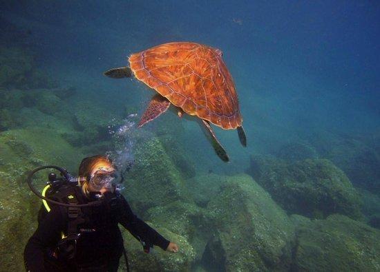 Blue Bottom Diving : El Puertito