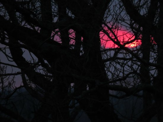 Bryn-y-Ddafad Country Guest House: Sunset through the Oak Tree
