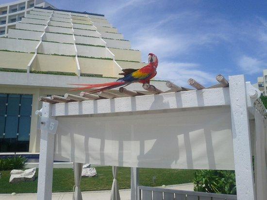 Live Aqua Beach Resort Cancun: Vue partielle du Live Aqua (sud-est).