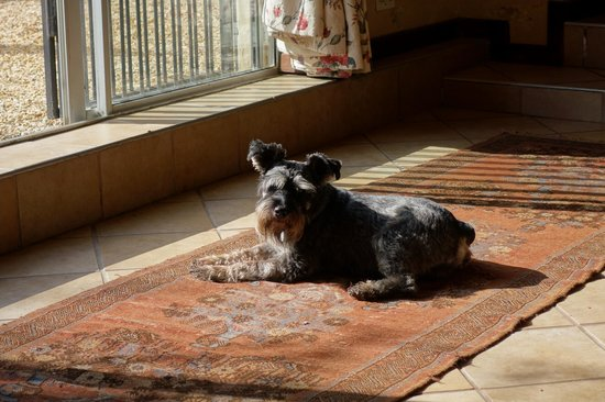 Hopefield Country House: One of the Four Schnauzers - but  which one I cannot recall