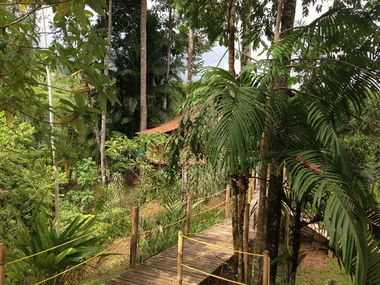 Safari Adventures : Hut in the jungle