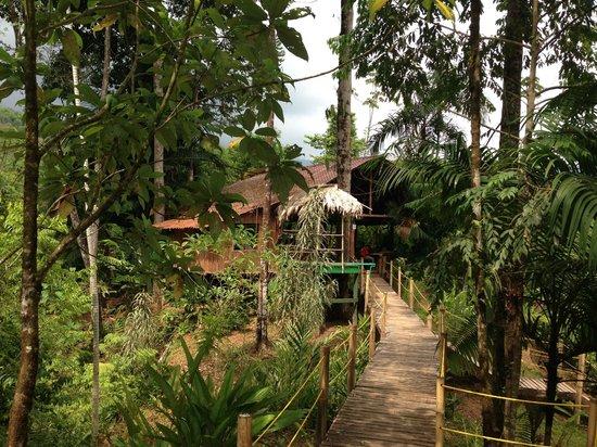 Safari Adventures : Civilization in the jungle