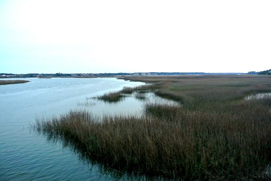 Old Oyster Factory: The view