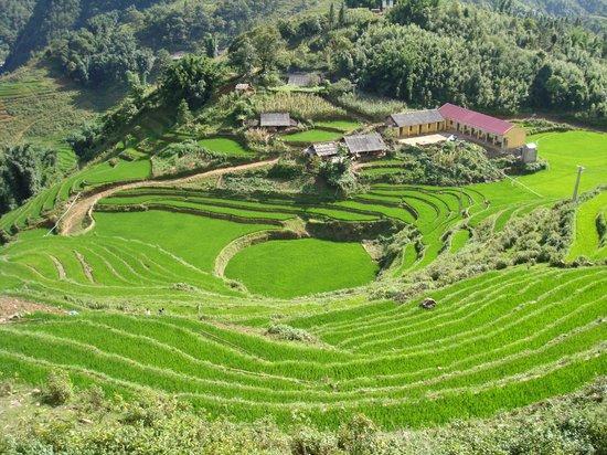 Mozaik Voyages Vietnam: Sapa : rizières en terrasses