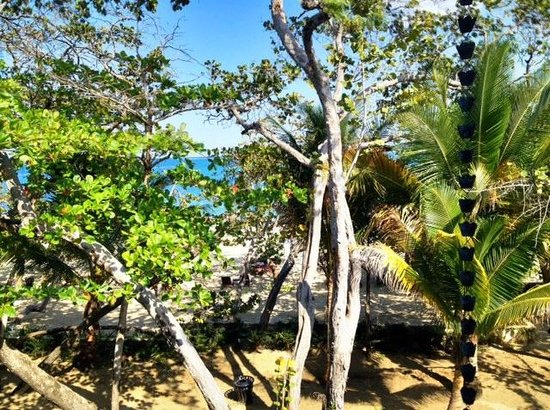 Casa Colonial Beach & Spa: View of Beach Trees from Room36