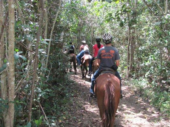 """Bacab Eco Park: Riding through the """"jungle"""" of Belize"""