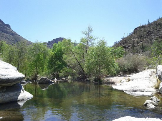 Sabino Canyon stop #8 on the creek