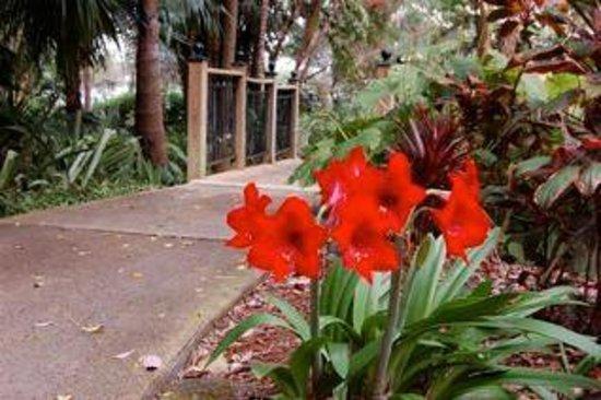 Harry P. Leu Gardens: Nice