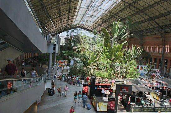 Estación de Atocha: 植物園