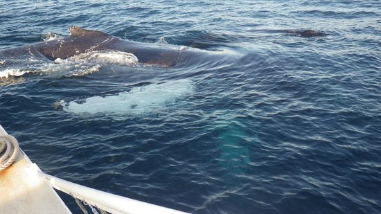 Lani Kai Snorkeling: Whales right alongside the boat!