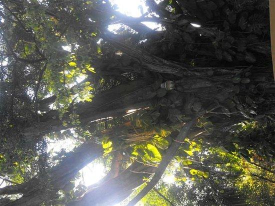 Hotel Trapp Family Country Inn: Sun peeking through lush canopy of trees