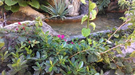 Divi Little Bay Beach Resort: Plants/Landscaping